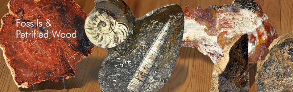 Polished Fossils